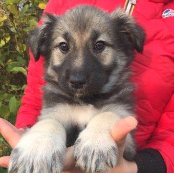 Тотошка - Собаки в добрые руки