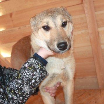 Вита - Собаки в добрые руки