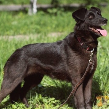 Лора - Собаки в добрые руки