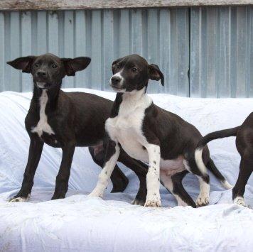 Щенки-капельки - Собаки в добрые руки