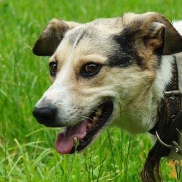 Лакки - Собаки в добрые руки