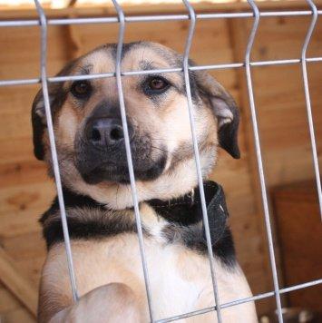 мила - Собаки в добрые руки