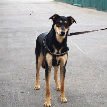 Аура - Собаки в добрые руки