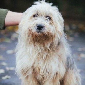 Кристиан - Собаки в добрые руки