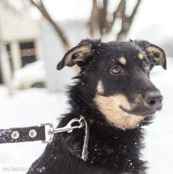 Стинг - Собаки в добрые руки