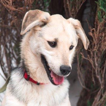 Фиалка - Собаки в добрые руки