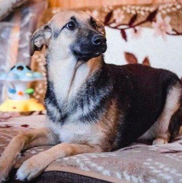 Хилла - Собаки в добрые руки