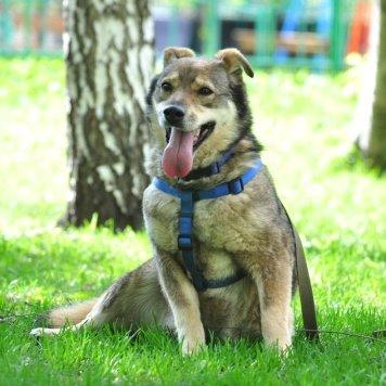 Лисёна - Собаки в добрые руки