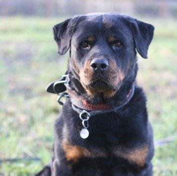 Тимьян - Собаки в добрые руки