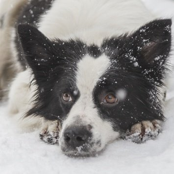 Джультта - Собаки в добрые руки