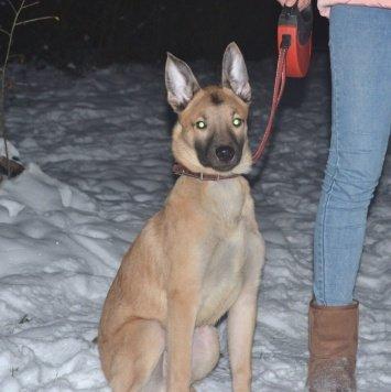 Иван - Собаки в добрые руки