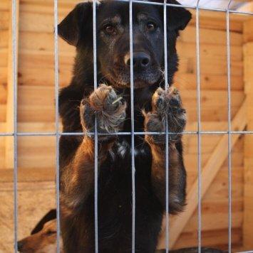 Анчар - Собаки в добрые руки