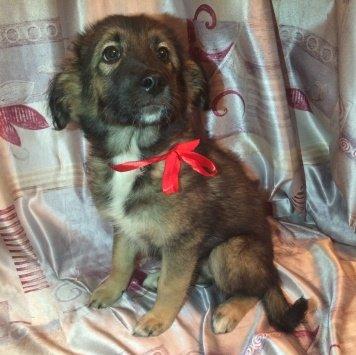 Красная ленточка - Собаки в добрые руки