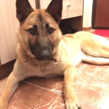 Альфа - Найденные собаки