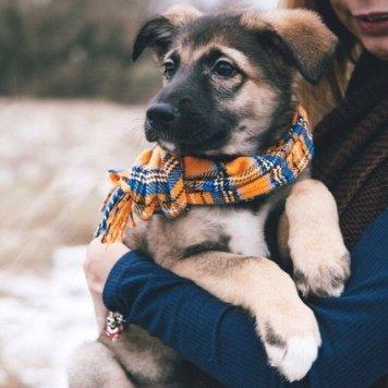 Ричард - Собаки в добрые руки