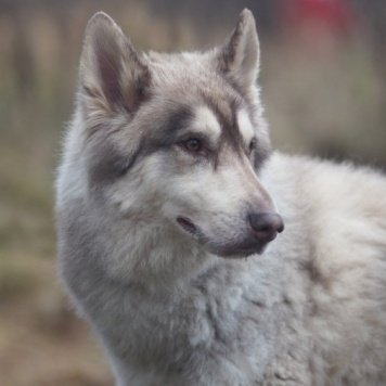 Айран - Собаки в добрые руки