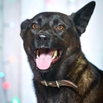 Хатти - Собаки в добрые руки