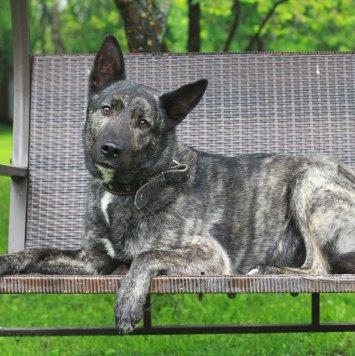 Бакс - Собаки в добрые руки