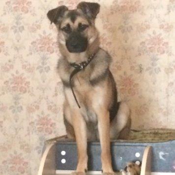 Хайтер Фангория - Собаки в добрые руки