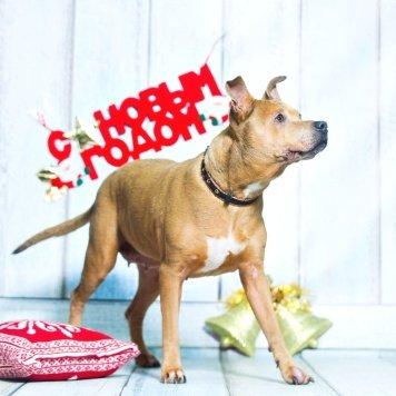 Катюша - Собаки в добрые руки
