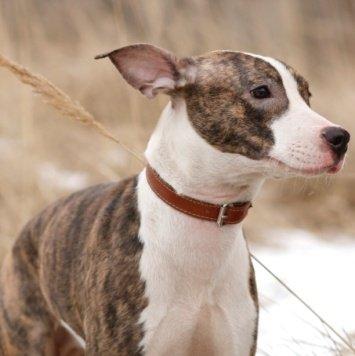 Яночка - Собаки в добрые руки