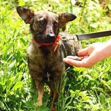 Мышка - Собаки в добрые руки