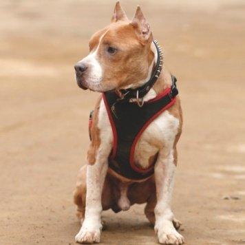 Астор - Собаки в добрые руки