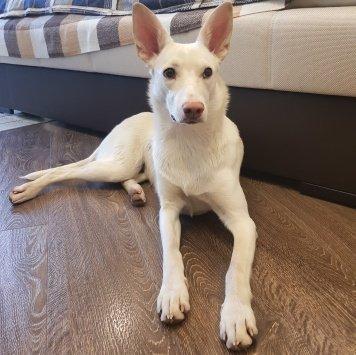 Феня - Найденные собаки