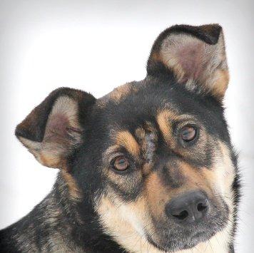 Тесса - Найденные собаки