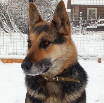 Асти - Собаки в добрые руки