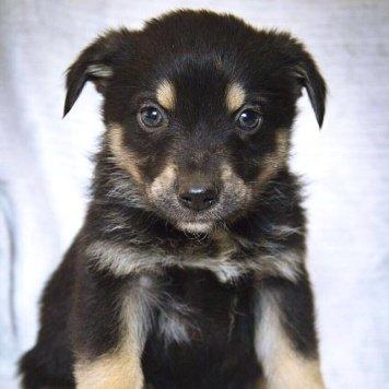 Девочка - Собаки в добрые руки
