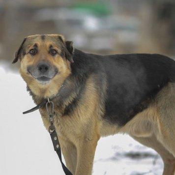Потапыч - Собаки в добрые руки