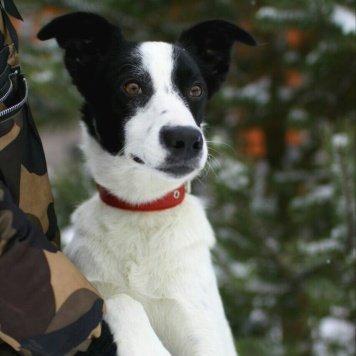 Аким - Собаки в добрые руки