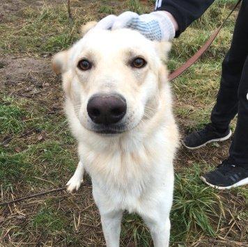 Пломбир - Собаки в добрые руки