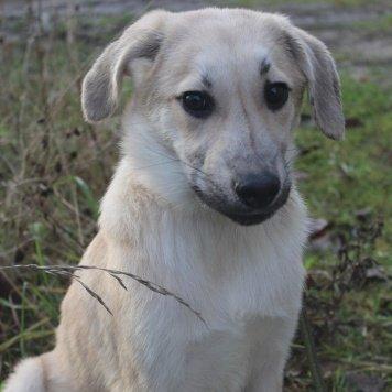 саечка - Собаки в добрые руки