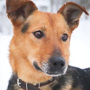 тайга - Собаки в добрые руки