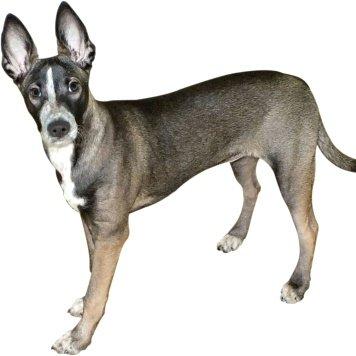 Рэй - Найденные собаки