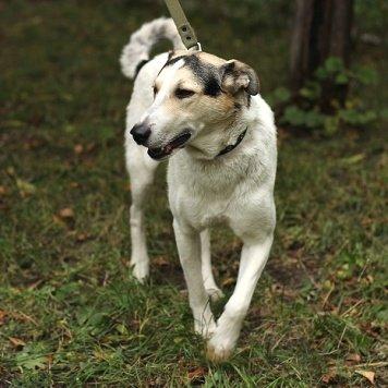 Антоша - Собаки в добрые руки