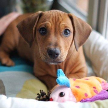 Сникерс - Собаки в добрые руки