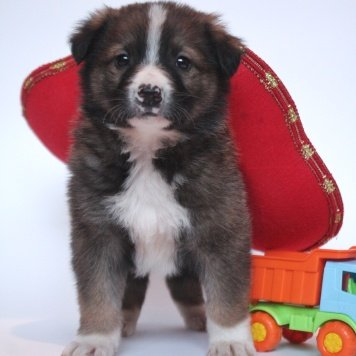Амур - Найденные собаки