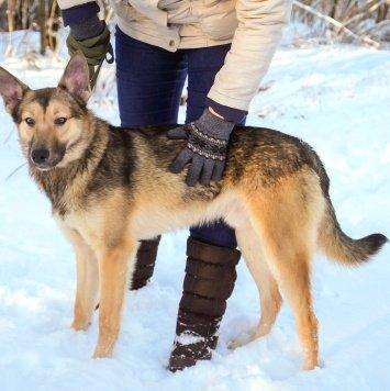 Ренат - Собаки в добрые руки