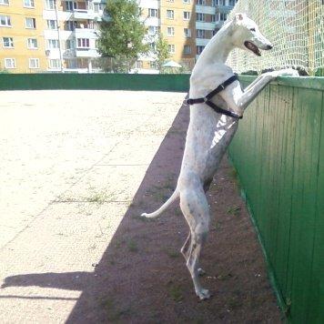 Паркер - Собаки в добрые руки
