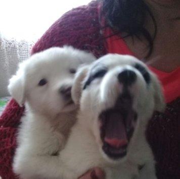 Милашки - Найденные собаки