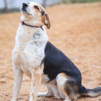 Марфуша - Собаки в добрые руки