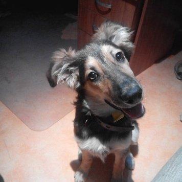 Диана - Собаки в добрые руки