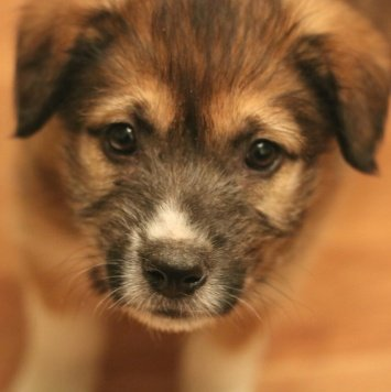 Майли - Собаки в добрые руки