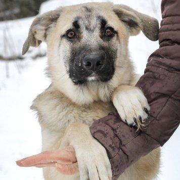 Викуся - Собаки в добрые руки