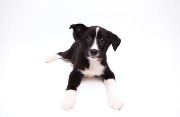 Криста - Собаки в добрые руки