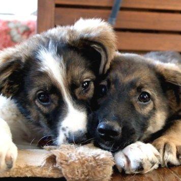 Ринго - Собаки в добрые руки