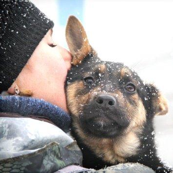 Тоши и Таша - Найденные собаки